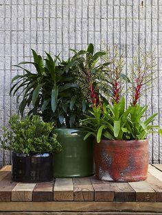Ronnie Terracotta Pots  www.robertplumb.com.au