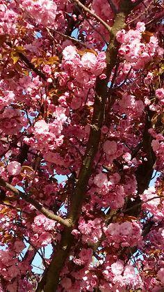 Tree Artwork, Spring Home Decor, Apple Tree, Tree Designs, Hand Towels, Beach Towel, Fine Art America, Stationery, Hand Painted