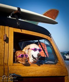 California dogs at the beach.....  <3
