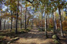 pfaelzerwald | Pfälzerwald im Herbst | Flickr - Photo Sharing!