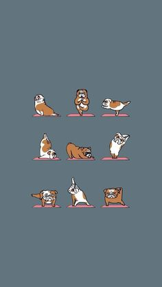 Wallpaper Phone Cute Backgrounds Funny Ideas For 2019 Funny Iphone Wallpaper, Macbook Wallpaper, Funny Wallpapers, Aesthetic Iphone Wallpaper, Cartoon Wallpaper, Wallpaper Quotes, Aesthetic Wallpapers, Pugs, Cute Backgrounds