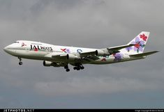 The Japan Airlines special schemes have always been great.. JA8150. Boeing 747-246B. JetPhotos.com is the biggest database of aviation photographs with over 3 million screened photos online!