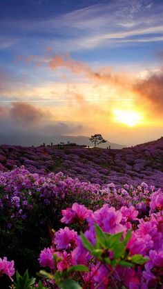 ✹Insight of the day Beautiful Nature Pictures, Nature Images, Pretty Pictures, Beautiful Landscapes, Beautiful Flowers, Beautiful Places, Amazing Photography, Nature Photography, Rhododendron