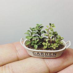 とりあえず初心者用の見本仕上げました!「ハーブの寄せ植え」が課題。素材は粘土やでー #ミニチュア #miniature