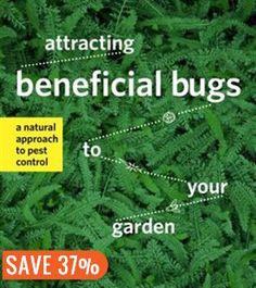 Attracting Beneficial Bugs to Your Garden: A Natural Approach to Pest Control Book by Jessica Walliser | Trade Paperback | chapters.indigo.ca