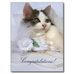 Wedding Kitten Postcard