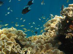 Maravagi - Solomon Islands Solomon Islands, Over The Years, World, Travel, Animals, Viajes, Animales, Animaux, Destinations