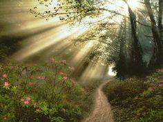 floresta_florida_ensolarada_e17f71f3b70c768caf16dffc30469fca_Nature (19).jpg (1600×1200)