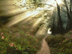 The Light of Morning on The Forest Paths