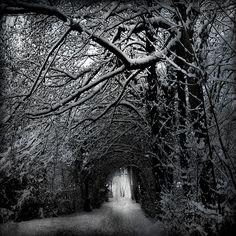 Unknown, Snow tree tunnel