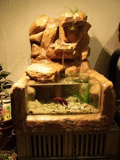 The Betta Betta Tank | Flickr - Fotosharing!
