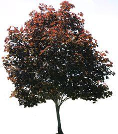 Tree PNG 01 by Thy-Darkest-Hour