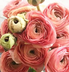 awesome vancouver florist Lots of beautiful ranunculus coming from Italy and Japan . Getting ready for Valentine ideas. #flowerfactory #ordervalentinesflowers by @flowerfactory  #vancouverflorist #vancouverflorist #vancouverwedding #vancouverweddingdosanddonts
