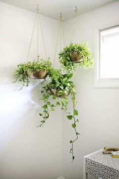 Creative And Natural DIY Hanging Plants For Your Home diy diyhanging hangingplants 642114859352258259 Hanging Plants Outdoor, Diy Hanging Planter, Indoor Plants, Wall Hanging Plants Indoor, Hanging Gardens, Ceiling Hanging, Window Hanging, Planter Ideas, Indoor Gardening