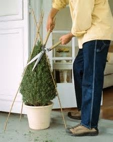 Image result for topiary trimming guide