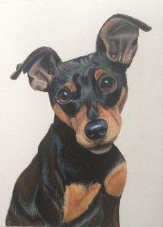 Miniature Pinscher Dog Pencil Drawing Art Print By Artist