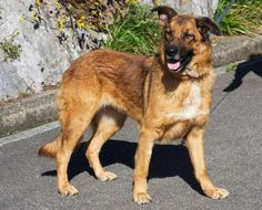 Zampa (Junio 2009) Muy buena, sociable y cariñosa. Tiene un carácter excepcional.