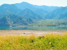 Cisne en el Lago del Dique Potrrerillos Mountains, Nature, Travel, Lakes, Scenery, Places, Naturaleza, Viajes, Trips