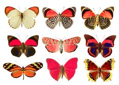 Butterflies png by AbsurdWordPreferred.deviantart.com on @deviantART