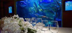 Aquadom & Sea Life Berlin  Top 40 Hochzeits-Location Berlin #hochzeit #feiern #location #event #einzigartig #weiß #schwarz #heirat #berlin #special #wedding #unique #stunning
