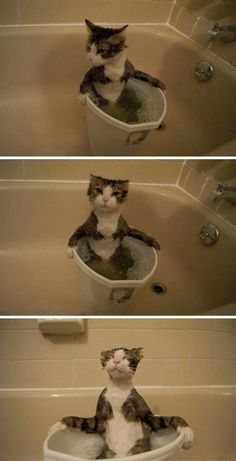 Very interesting post: 25 Funny Cats and Kittens Pictures. Also dompiсt.сom lot of interesting things on Funny Cat.