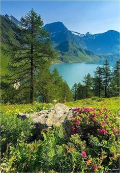 Summer in the Swiss Alps Please Follow:- +Wonderful World