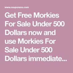 Get Free Morkies For Sale Under 500 Dollars now and use Morkies For Sale Under 500 Dollars immediately to get % off or $ off or free shipping Morkies For Sale, Morkie Puppies For Sale, Teacup Yorkie For Sale, Tiny Puppies, Australian Shepherd Mix, Lancaster Puppies, Dogs For Sale, Got Off, Free Shipping