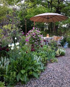 """Still tulips in bloom.Clematis """"Sorbet"""""""