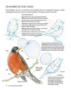 Laws Guide to Drawing Birds breast feathers