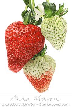 "Strawberries © 2009 ~ annamasonart.com ~ 46 x 61 cm (18"" x 24"")"