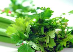 7 Top Ingredients For Cancer Fighting Smoothie Recipes Smoothie Vert, Smoothies, Celerie Rave, Raw Food Recipes, Parsley, Celery, Herbs, Vegetables, Nutrition