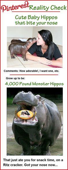Baby Hippos Grow Up