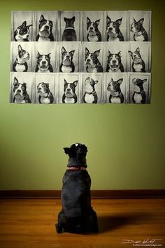 I should do this with pictures of Winsor and Bella for their room/my office! Yes, my dogs have two rooms in my house. well they just plain own the house! lol Boston Terriers,Dogue Pawparazzi,For The Love Of Dogs,Pet I Love Dogs, Puppy Love, Cute Dogs, Diy Pet, Funny Animals, Cute Animals, Animals Dog, Boston Terrier Love, Boston Terriers