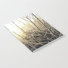 Winter sunlight Notebook by minnac How To Dry Basil, Sunlight, My Photos, Notebook, Herbs, Winter, Design, Winter Time, Sun Light