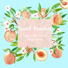 Peaches clip art. Digital Watercolours clipart hand drawn. SET Sweet peaches. Romantic wedding tender  fruits for cards, invitations