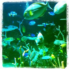 Fishies in the deep blue sea... at Seattle Aquarium.