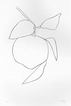 alightthatnevergoesout:    and another lovely Ellsworth Kelly plant drawing