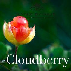 Cloudberry seed oil has an unique combination of natural antioxidant, is rich in UV protecting carotenoisa and is highly effective in skin soothing. The exotic plant cloudberry grows in the mountains in the Northern part of the world and its gold color assembles the midnight sun.