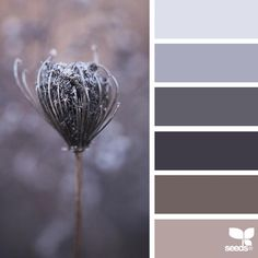 today's inspiration image for { nature tones } is by @julie_audet ... thank you, Julie, for another wonderful #SeedsColor image share!