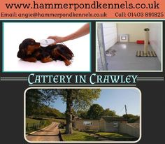 For more details you can visit at: http://www.hammerpondkennels.co.uk/nav/grooming-services