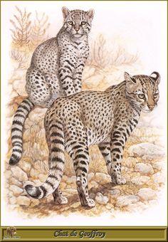 Felpa con Cappuccio Nero Animale Natura Selvaggia Motivo Modello Wilderness Wolf