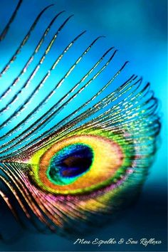 Peacock colors...ever so slightly changing, by angle and lighting.