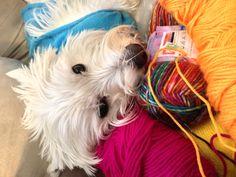 My crochet buddy ❤