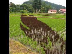 Arte japonesa em campos de arroz - YouTube