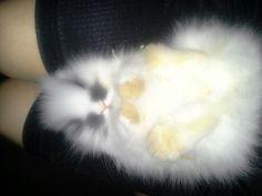 My cute bunny