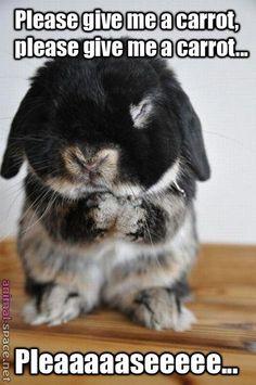 praying-bunny-910