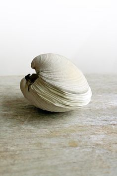 Offering No 73 Handstitched Clamshell Book Sculpture by odelae, $65.00 .That would be just perfect for my house at the sea!