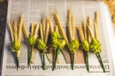 DIY hops & barley boutonnieres, photo by cptphotography.com