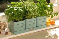 Set di tre Vasi per piante aromatiche Verde, BURGON & BALL  - set composto da tre vasetti in latta verniciata con sottovaso  - pensato per coltivare erbe aromatiche di frequente consumo in un piccolo spazio (balcone, davanzale, cucina)  - ogni vasetto presenta un'etichetta pre stampata che riporta i nomi di alcune erbe ( timo, prezzemolo, basilico), ma è possibile comporre un'etichetta personalizzata da inserire negli appositi spazi  - Dimensioni totali: cm 34 x 12 x H.:12 cm