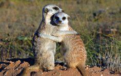 Estes caras sabem que um abraço amigável pode fazer com que você se senta melhor qualquer dia da semana: